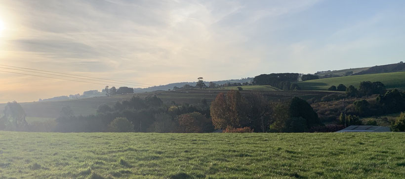 Autumn sun hits our green hills.
