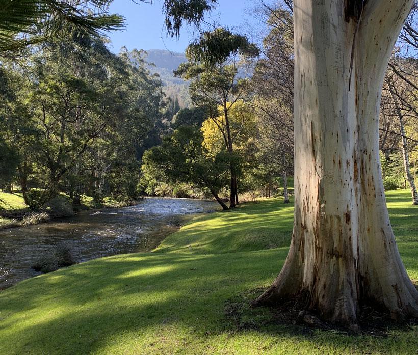 Yarra River, Warburton, Australia.