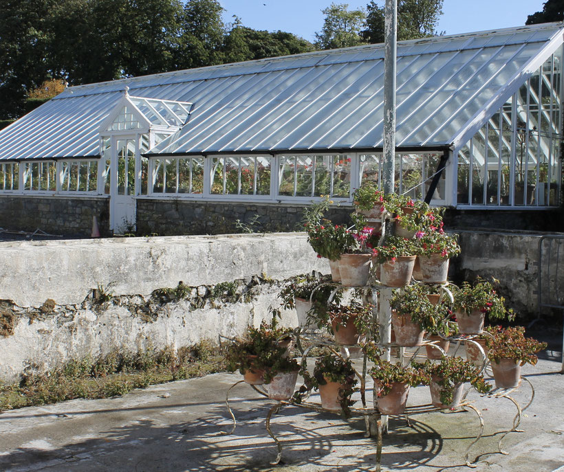 Potted plants outside greenhouse at Birr Castle.