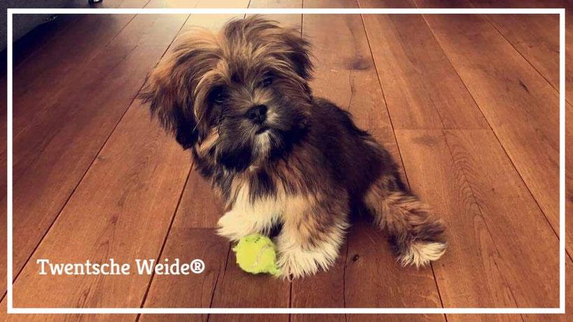 Boomer-pups-Twente