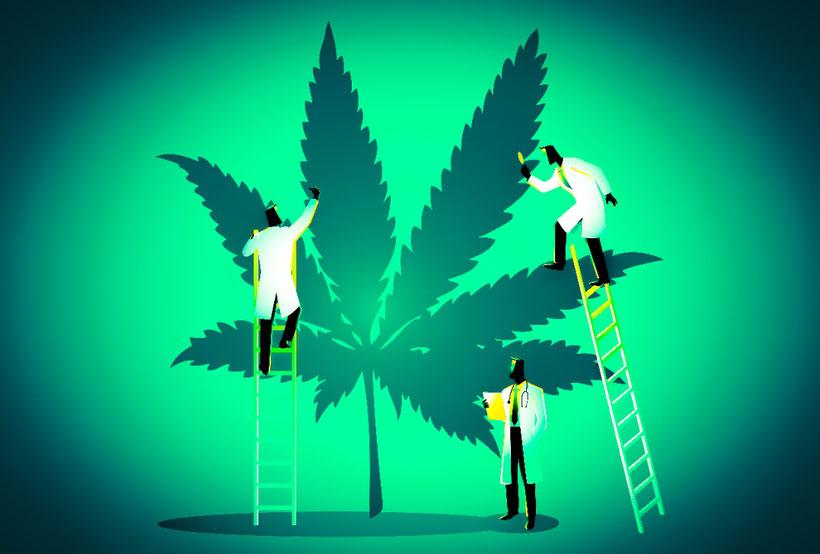 Cannabis-Experten