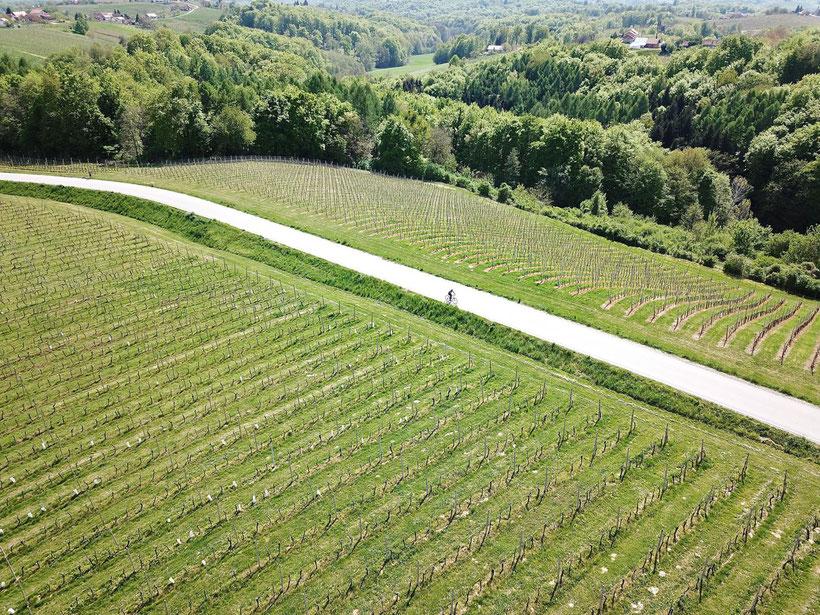Jeruzalem - A Scenic Wine Region in Slovenia