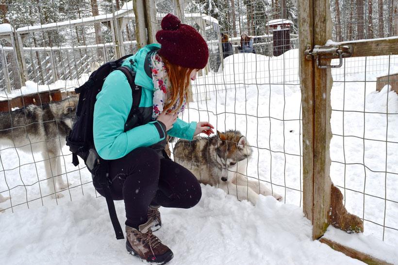 Husky Farm & Husky Sledding in Rovaniemi, Finland