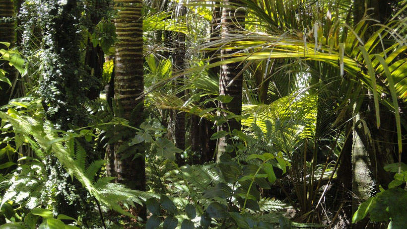 Seven Natural Wonders of Brazil - Rainforest
