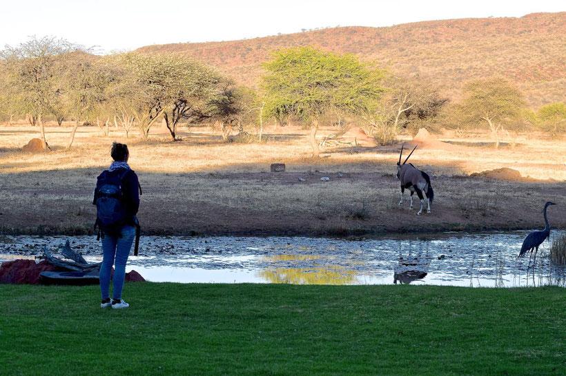 Where to Stay in Namibia? Okonjima Lodge