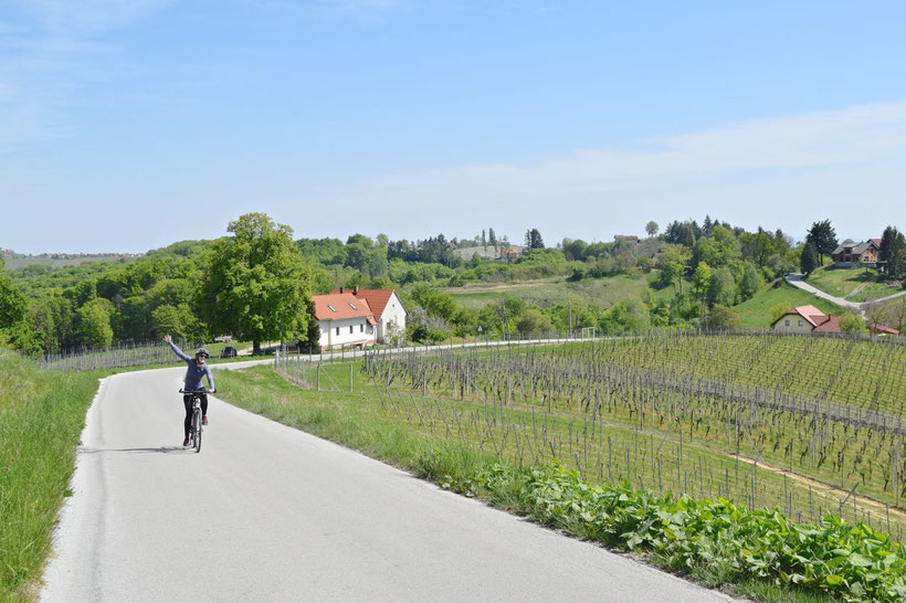 Biking in Jeruzalem, Slovenia - Approaching Jeruzalem
