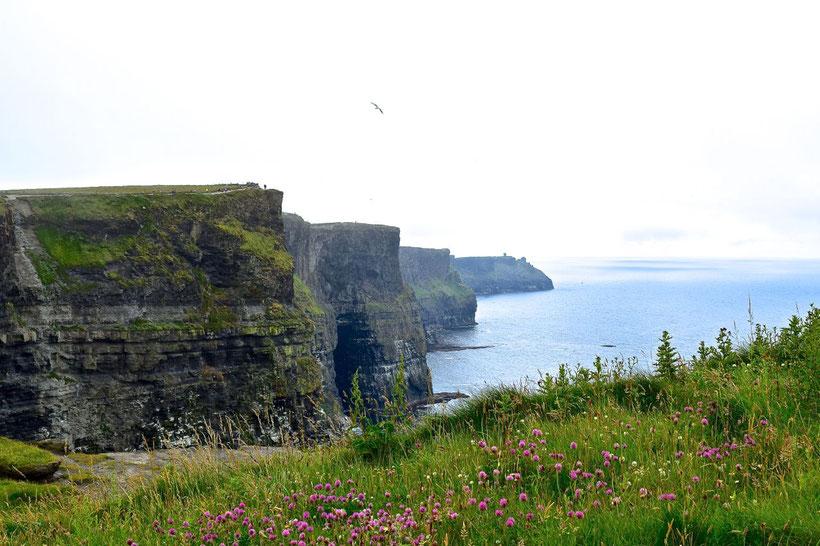 What to Do around Cork, Ireland - Cliffs of Moher