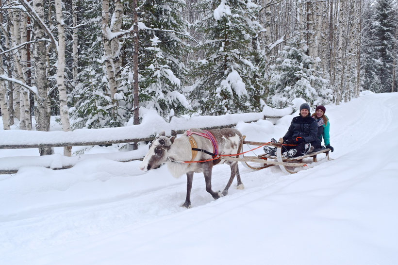 What to Do in Rovaniemi, Finland in Winter - Reindeer Sledding
