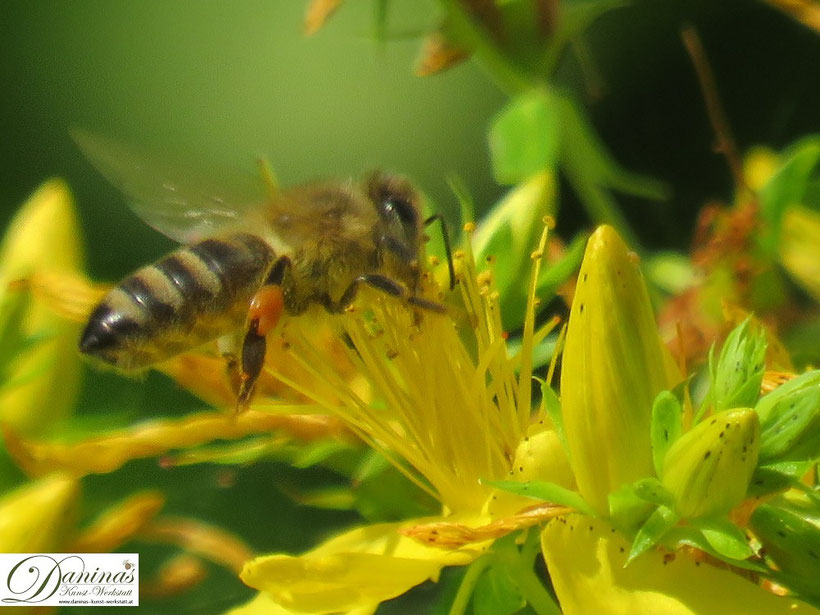 Honigbienen und Insekten schützen - zum Erhalt der Artenvielfalt