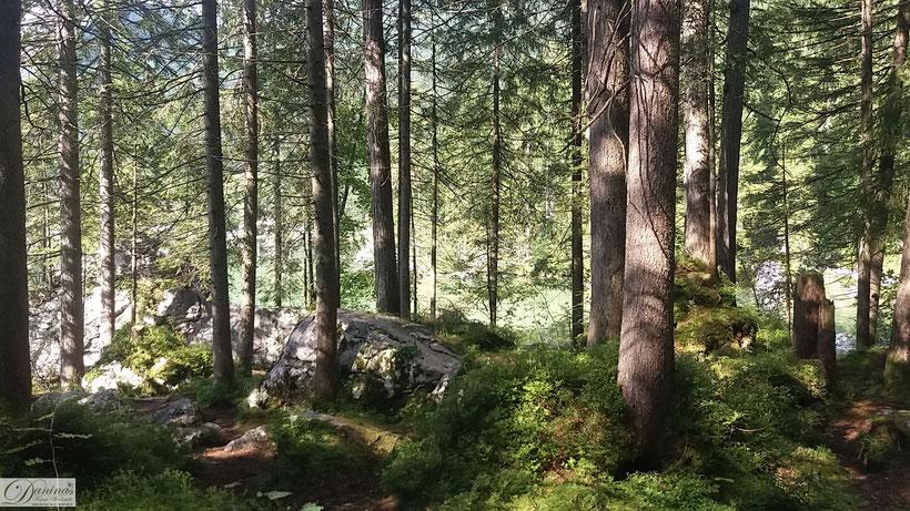 Kraft des Waldes - Natur für mehr Gesundheit und Wohlbefinden - Foto by Danina's Kunst Werkstatt