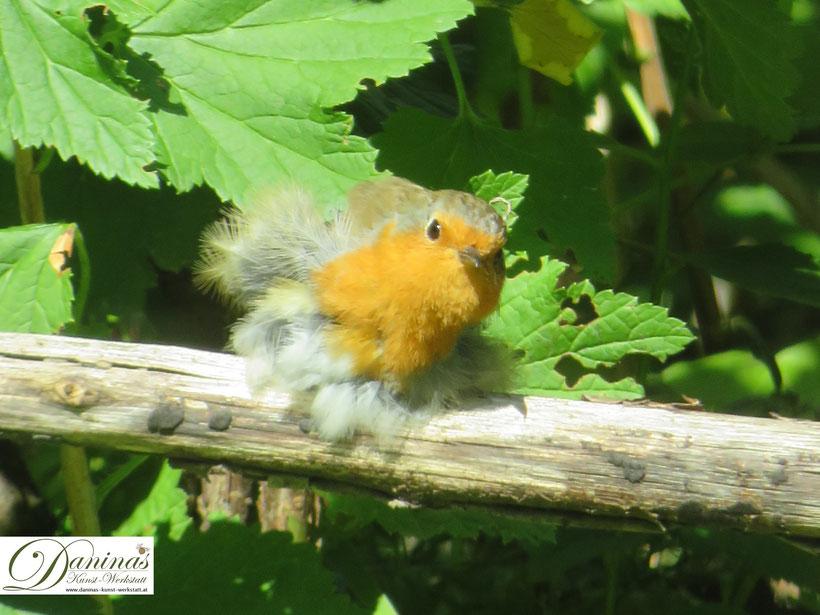 Rotkehlchen brühten gerne geschützt unter aufgeschichteten Zweighaufen, die im naturnahen Garten bereitgestellt werden.