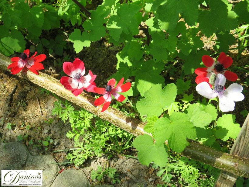 Bienenblumen und Schmetterlingsblumen im Naturgarten um Insektensterben zu verhindern