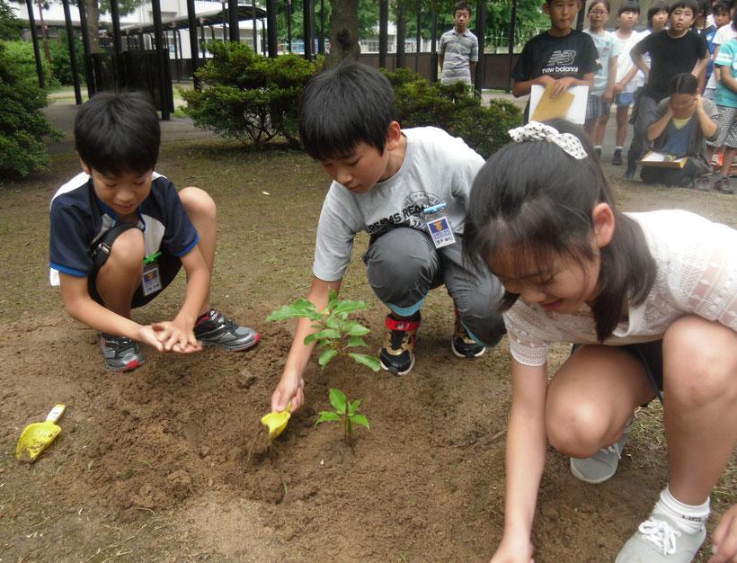 古賀西小での被爆クスノキ植樹(2016年)