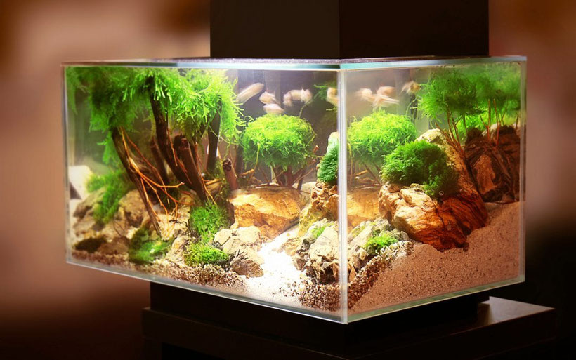 aquarium kaufen aquarium24 aquarien und mehr. Black Bedroom Furniture Sets. Home Design Ideas