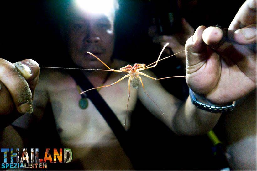 giftige tiere in thailand spinnen schlangen mehr urlaub in thailand. Black Bedroom Furniture Sets. Home Design Ideas