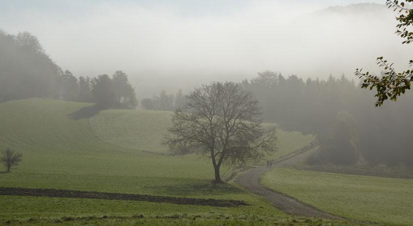 erleben  im Muggendorfer Gebirg   *   Naturpark Fränkische Schweiz