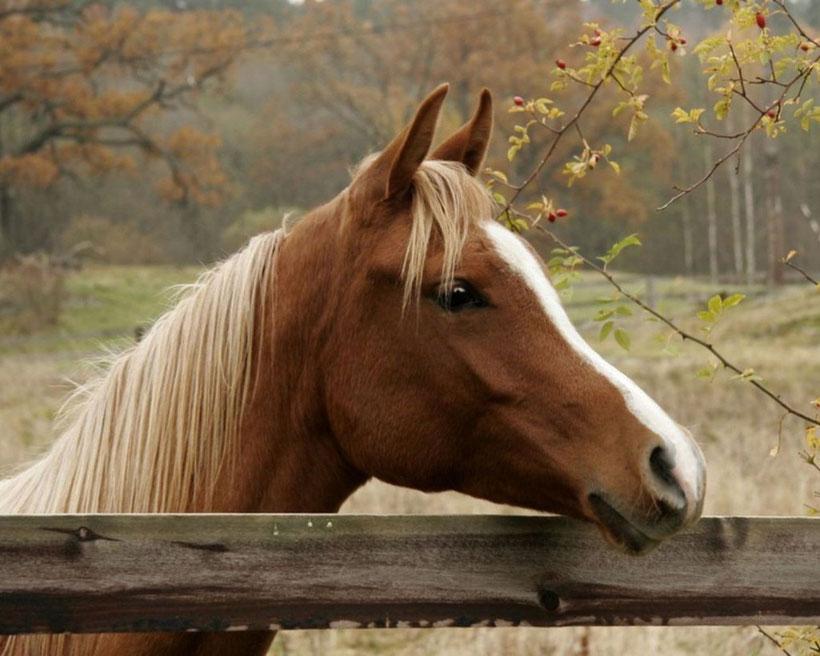 Лошади фото красивые картинки с надписями