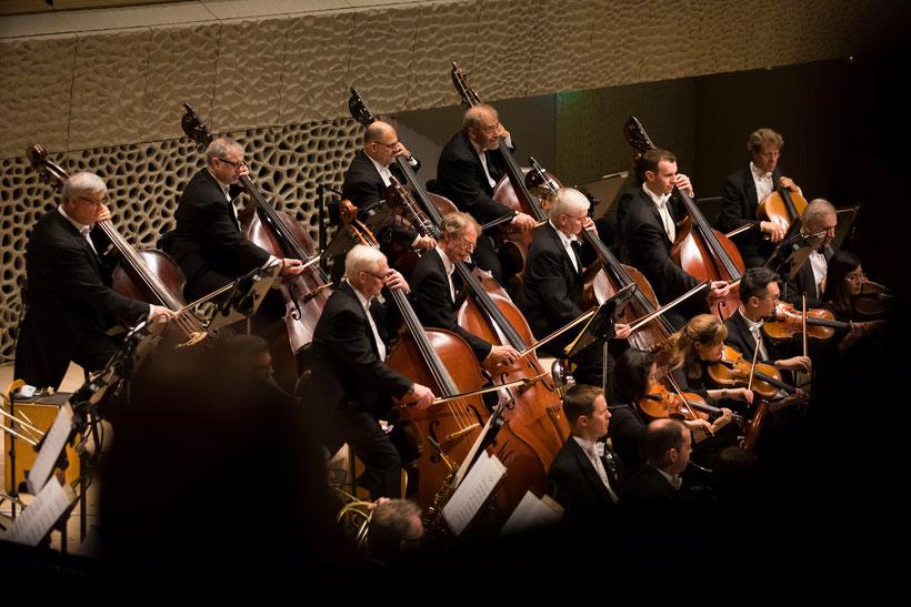 Die Streicher des Chicago Symphony Orchestra im Großen Saal der Elbphilharmonie Hamburg im Rahmen des Eröffnungsfestivals /  © Todd Rosenberg Photography