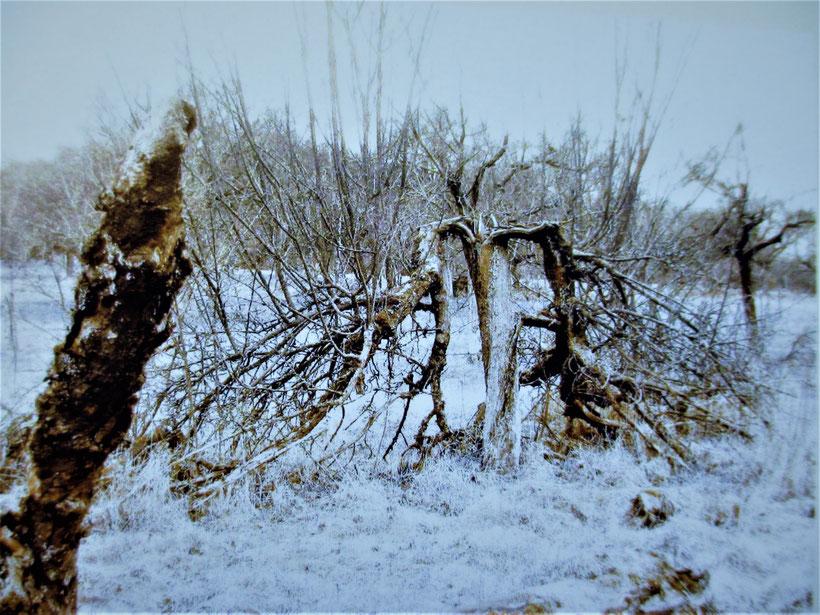"""Foto aus """"Wie ein Baum"""" von R.H. Greve"""