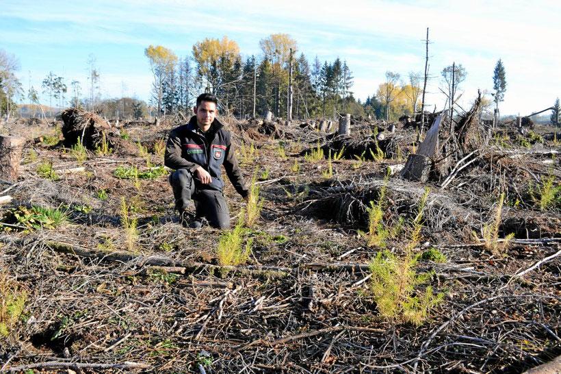 Forstinspektor Nicolas Suarsana zeigt die Waldschäden bei Dorstadt. Foto: Kai-Uwe Ruf