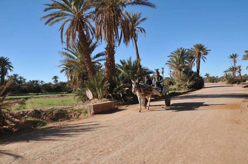 voyage désert maroc Vallée du Drâa