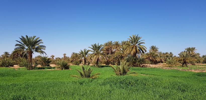 Plan du site Mélodie du désert
