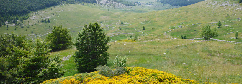 The Green Veliki Lubenovac valley of the Velebit National Park