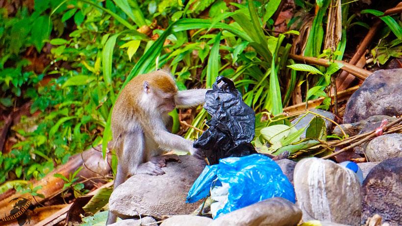 Affen ziehen immer ihr Ding durch. Sei ein Affe, spare Geld!