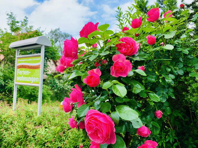 Eingangsbereich Landhaus Staffelstein Ende Juni zur schönsten Rosenzeit