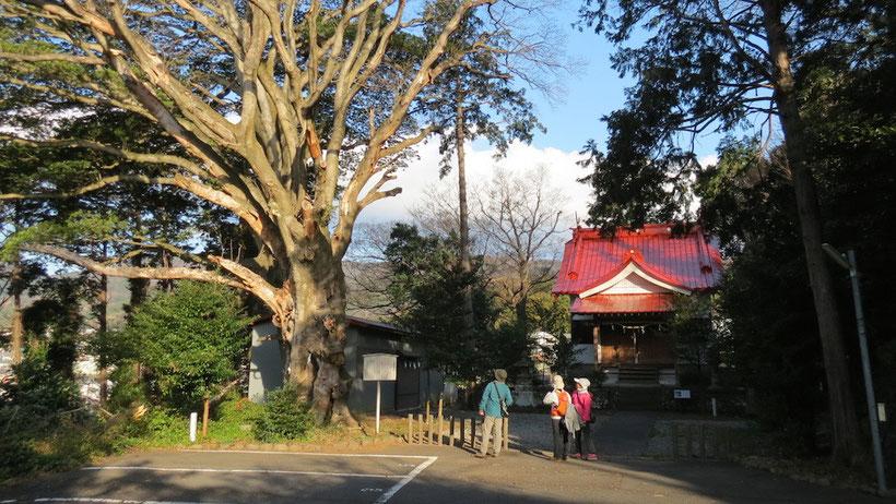 比波預天神社 ホルトの木