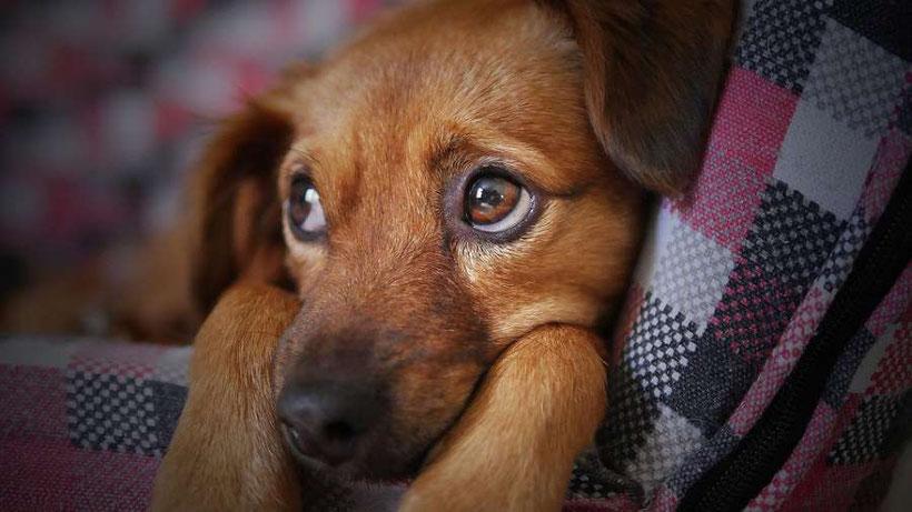 Trennung Hund teilen, geteiltes Sorgerecht Hund