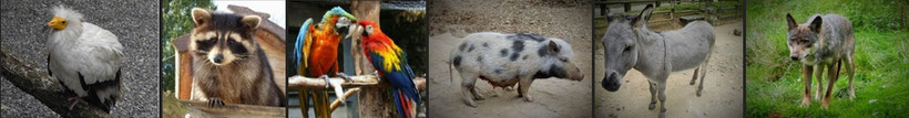 zoo im jura