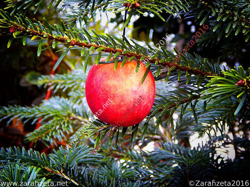 Weihnachtszeit mit Apfel als Christbaumkugel