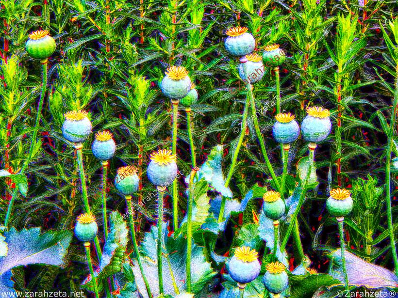 Zarahzetas Kunstwelt mit Mohnblumen im Impressionismus