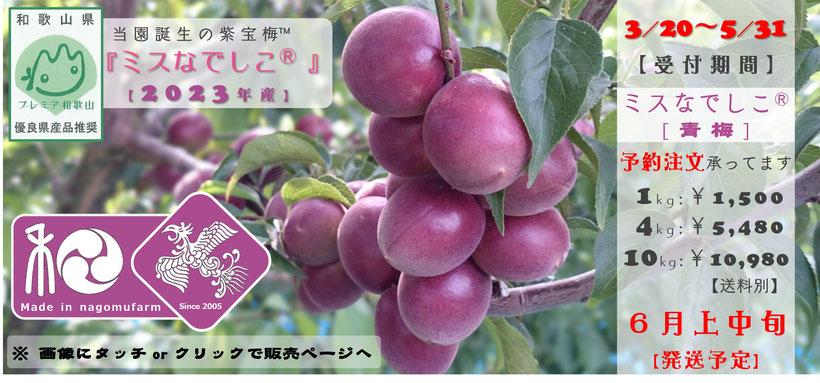 紫宝梅『ミスなでしこⓇ【青梅】』商いアイコン 和×夢 nagomu farm