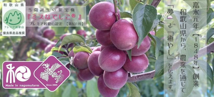 嘉永元年【1848年】創業 和×夢 nagomu farm 当園誕生の梅『ミスなでしこⓇ』プレミア和歌山認定