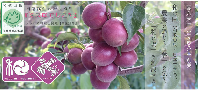 嘉永元年【1848年】創業 和×夢 nagomu farm 当園誕生の紫宝梅™『ミスなでしこⓇ』プレミア和歌山認定