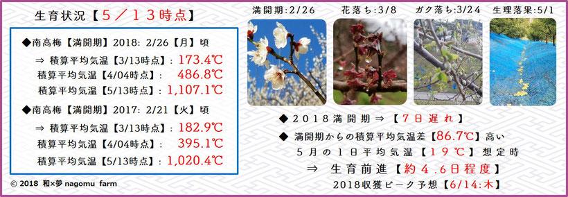 2018 南高梅生育状況【立夏:5/13時点】 和×夢 nagomu farm