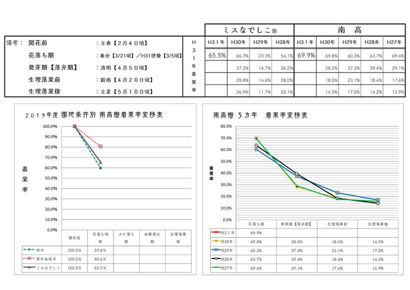 2019梅着果数調査【雨水】 和×夢 nagomu farm