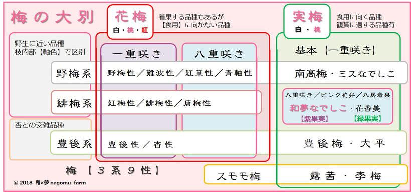 梅【3系9性】と 和夢なでしこ【位置付け】 和×夢 nagomu farm