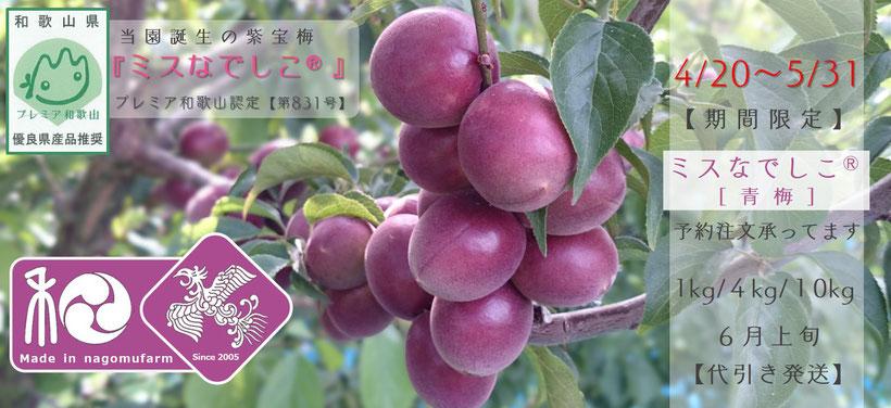紫宝梅『ミスなでしこⓇ』【予約注文】案内 和×夢 nagomu farm