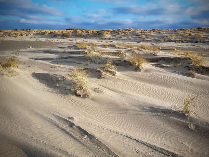 Texel : Duinen in wording