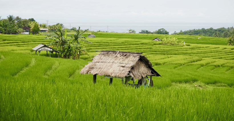 Auf Bali angekommen
