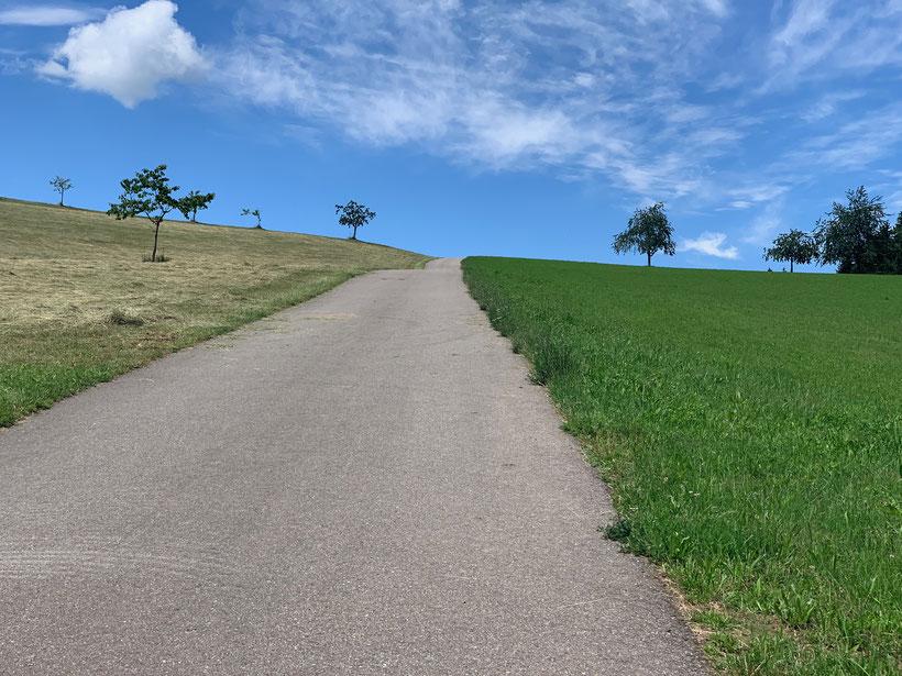 Blick in den Himmel am Geisberg im Schwarzwald
