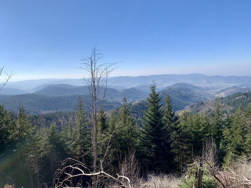 Blick ins Kinzigtal vom Kandelhöhenweg