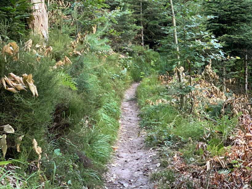 Jägerpfad auf der Wanderung im Schwarzwald bei Seelbach