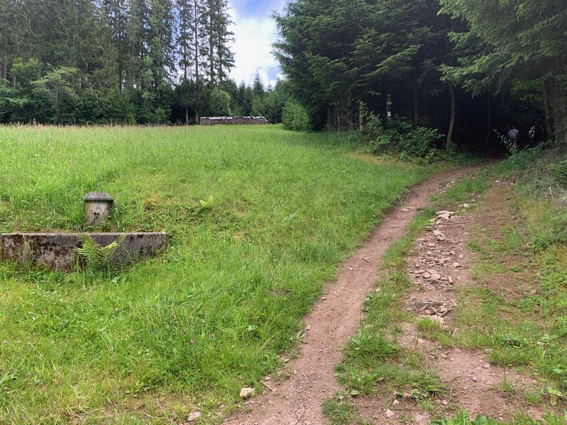 Wanderung am Gleisberg im Schwarzwald