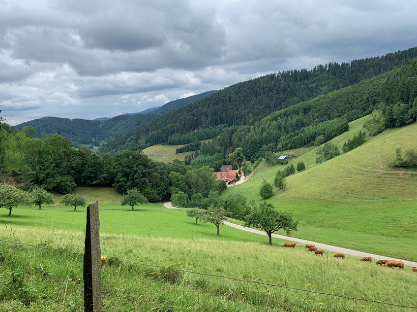 Schwarzwaldblick vom Käppelehof in Hausach