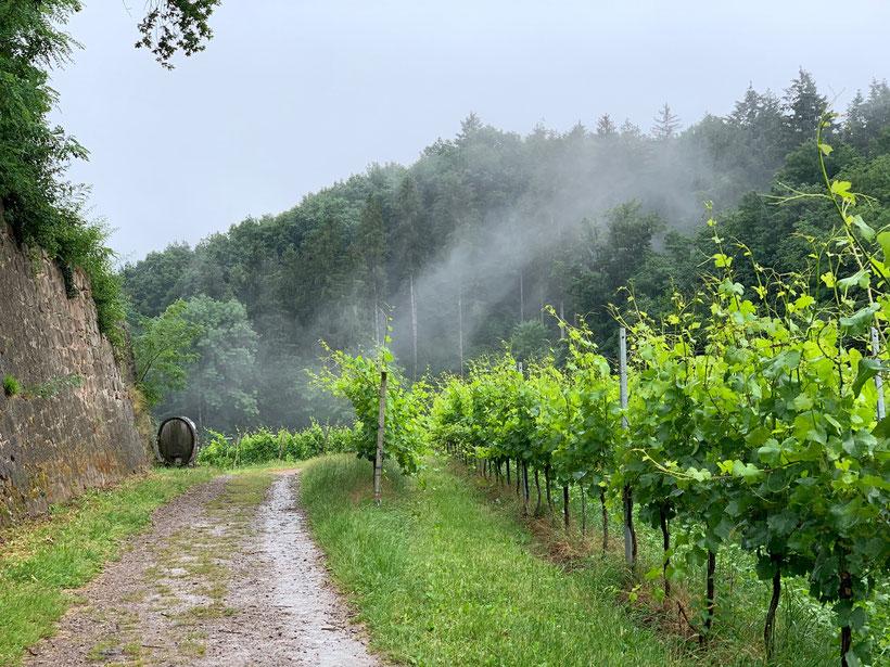 Wanderweg in Wald und Reben