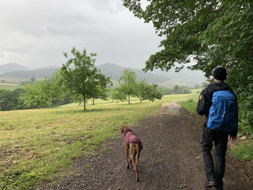 Wanderer mit Hund im Regen bei Maleck bei Emmendingen